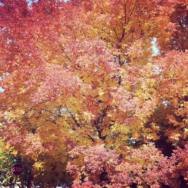 Hermoso día de otoño en Colorado ? disfrutando de la familia ?