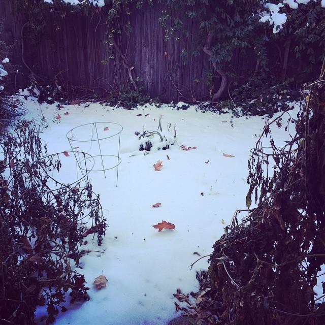 Llego el fin de mi adorada huerta por esta temporada ? Pero te volveré a ver en primavera! #huerta #llegoelfrio