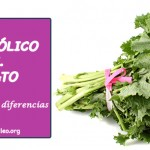 folato-vs.-acido-folico