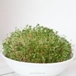 Como hacer germinados y brotes caseros